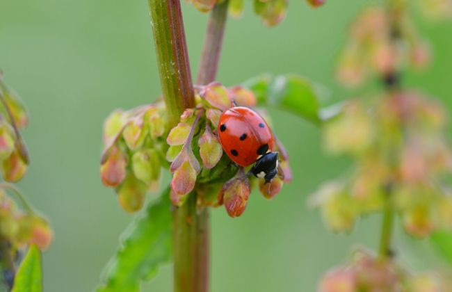 Ladybeetle Bug Red Green Colorful Nature Close-up Macro Photography Outside Nofilter Summer