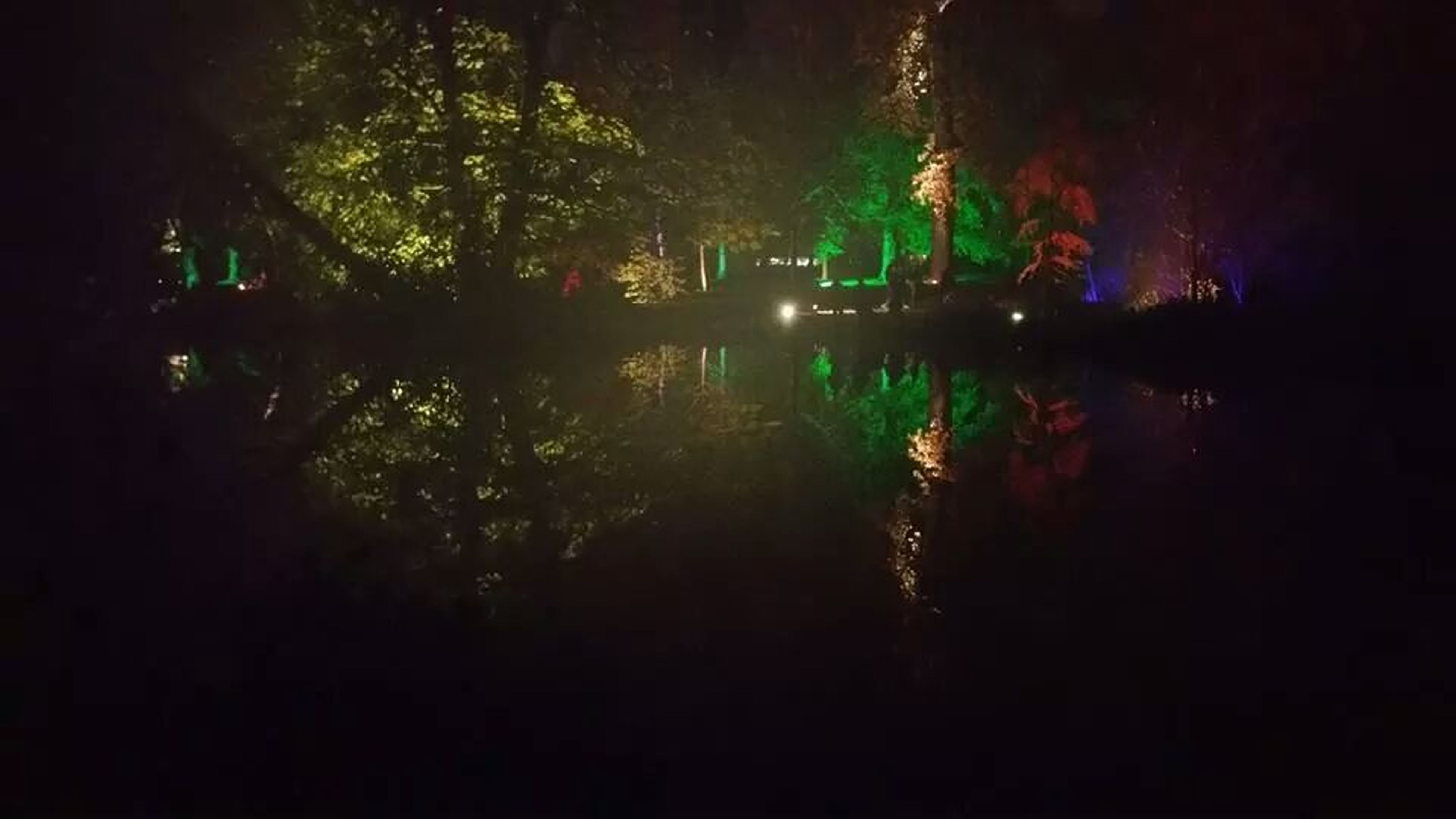 tree, tranquility, water, night, tranquil scene, growth, reflection, lake, nature, silhouette, beauty in nature, scenics, illuminated, dark, idyllic, outdoors, forest, plant, no people, green color