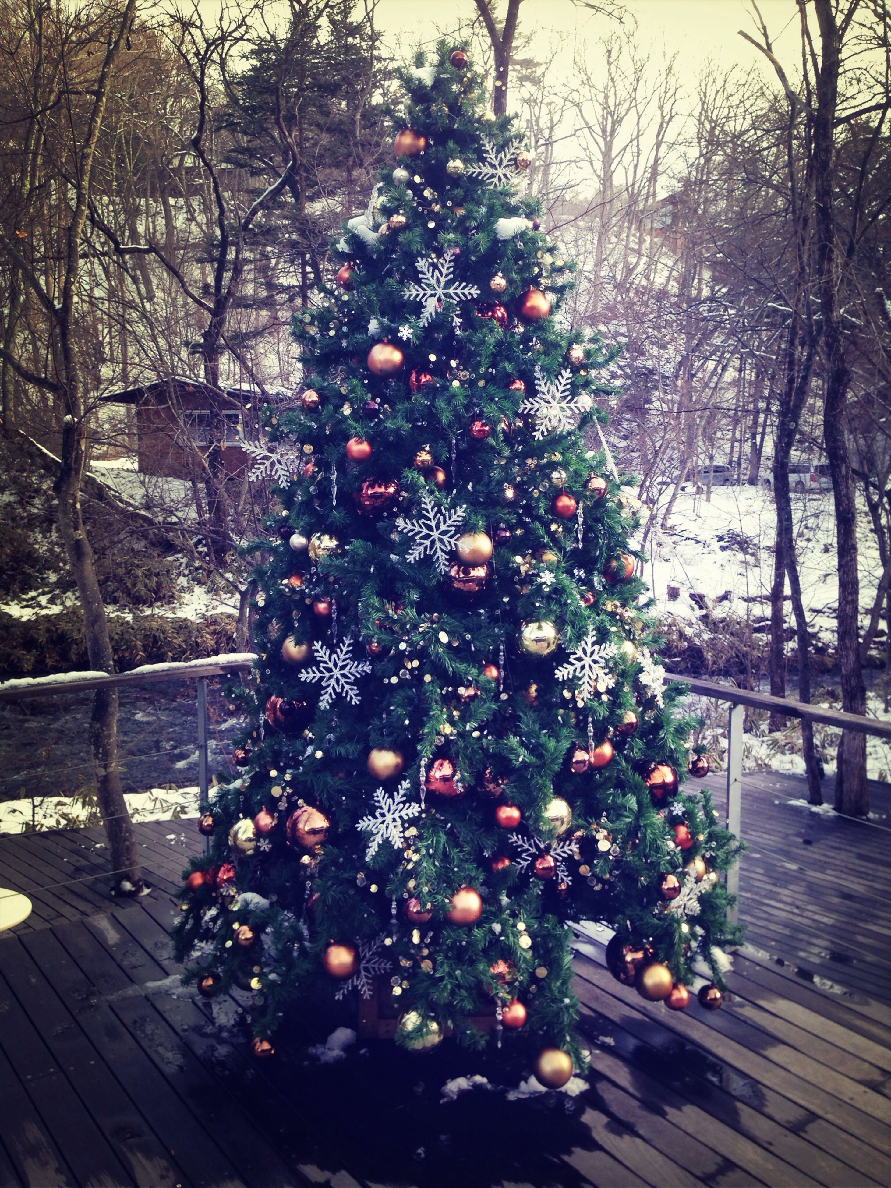 tree, branch, freshness, fruit, flower, growth, decoration, building exterior, hanging, christmas, built structure, architecture, food and drink, nature, christmas decoration, celebration, outdoors, no people, christmas tree, table