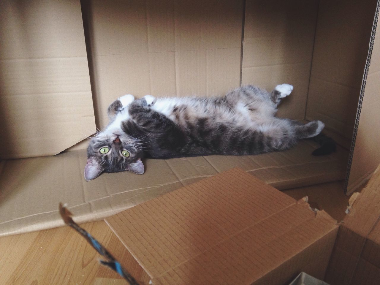 Domestic Cat Pets Domestic Animals Mammal Indoors  Animal Themes Feline One Animal Relaxation No People Cardboard Box Box - Container Lying On Back Tabby Cat