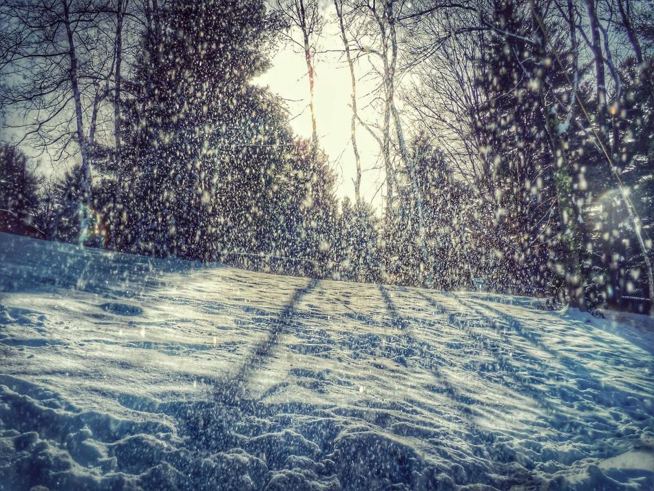 Beautiful stock photos of snowflake, Cold Temperature, Day, Forest, Landscape
