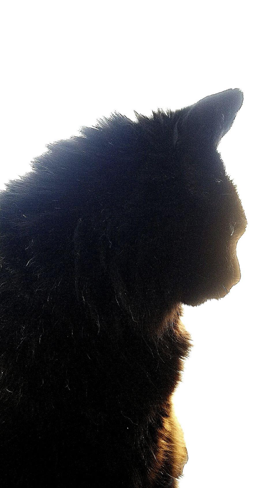 Cat Profile BLackCat Catface