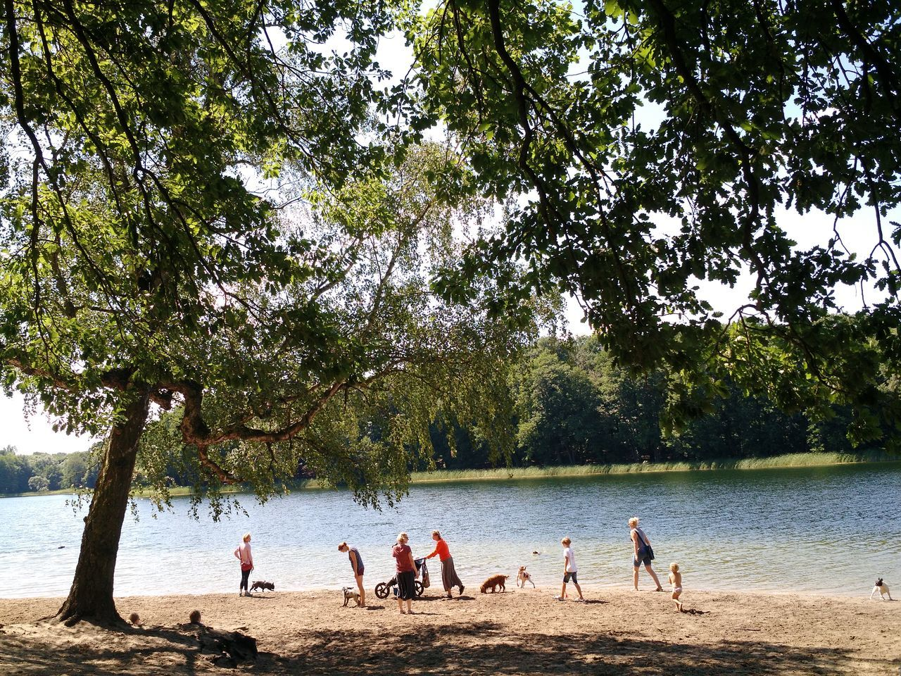 tree, day, medium group of people, outdoors, water, nature, growth, togetherness, real people, leisure activity, men, playing, beauty in nature, beach, sports team, competitive sport, sky, adult, people, adults only