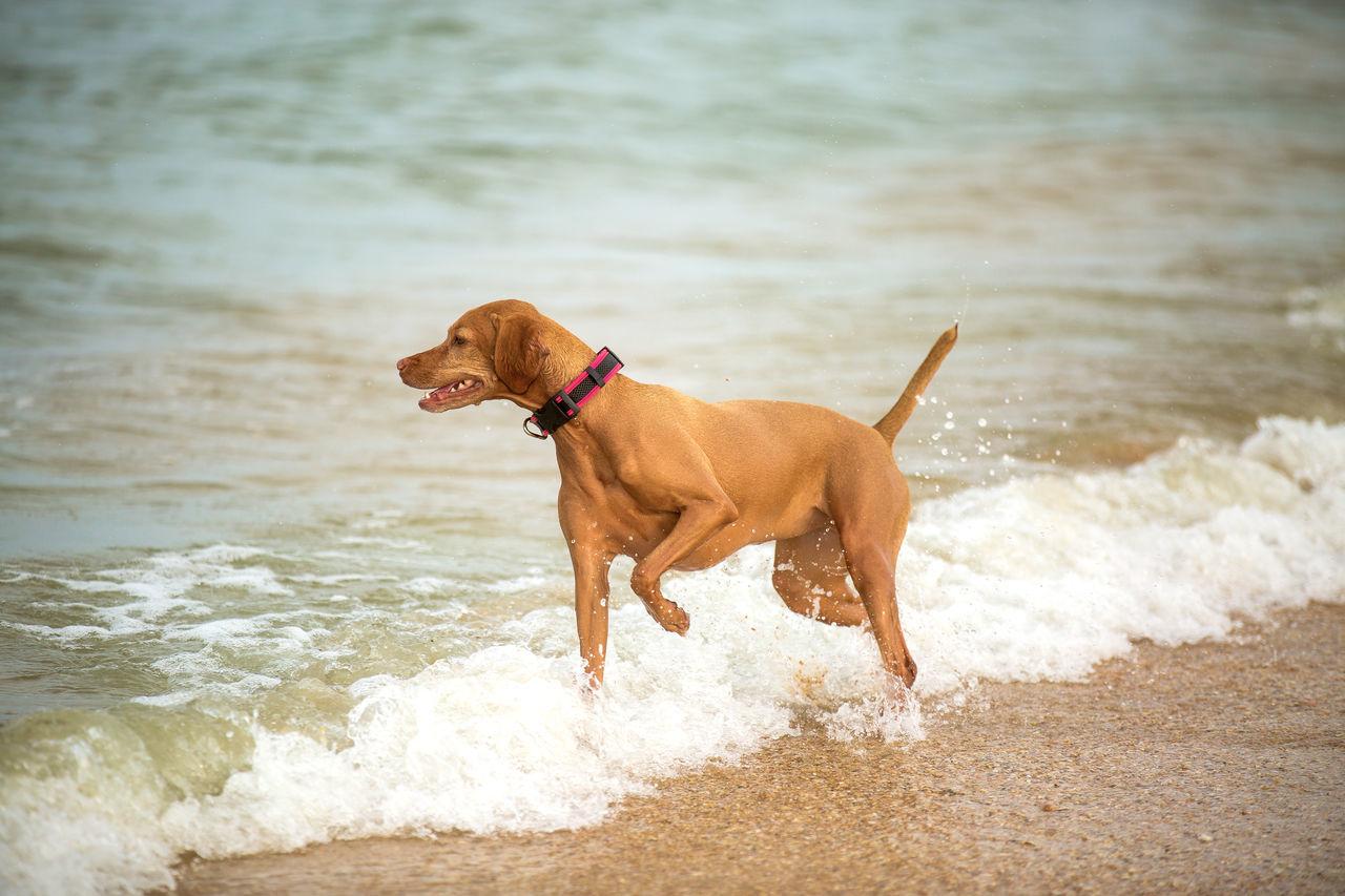 Beautiful stock photos of jagd, Animal Themes, Beach, Brown, Coastline
