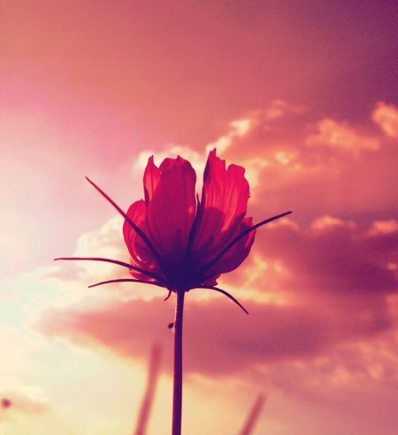 Flower Sunset Nature The Environmentalist – 2014 EyeEm Awards