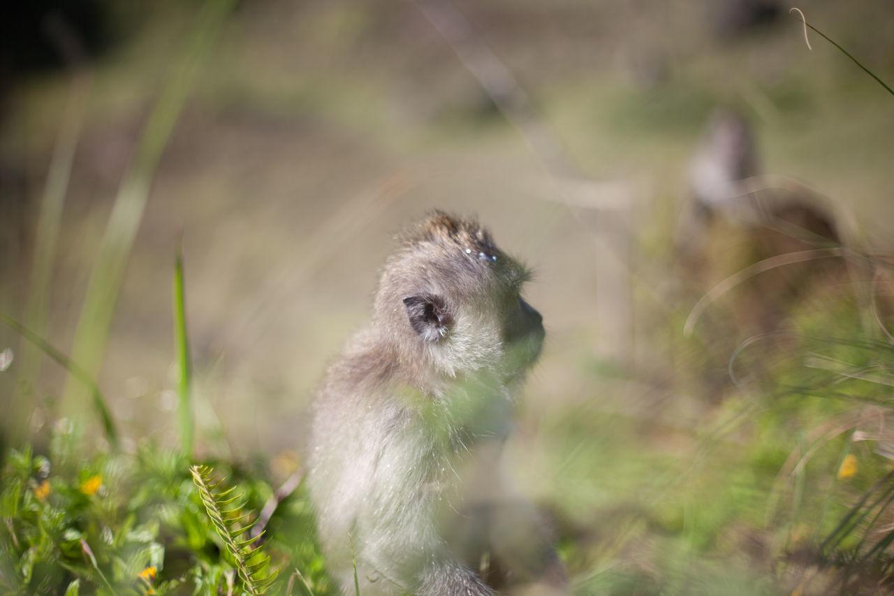 Beautiful stock photos of monkey, Animal Head, Animal Themes, Curiosity, Day