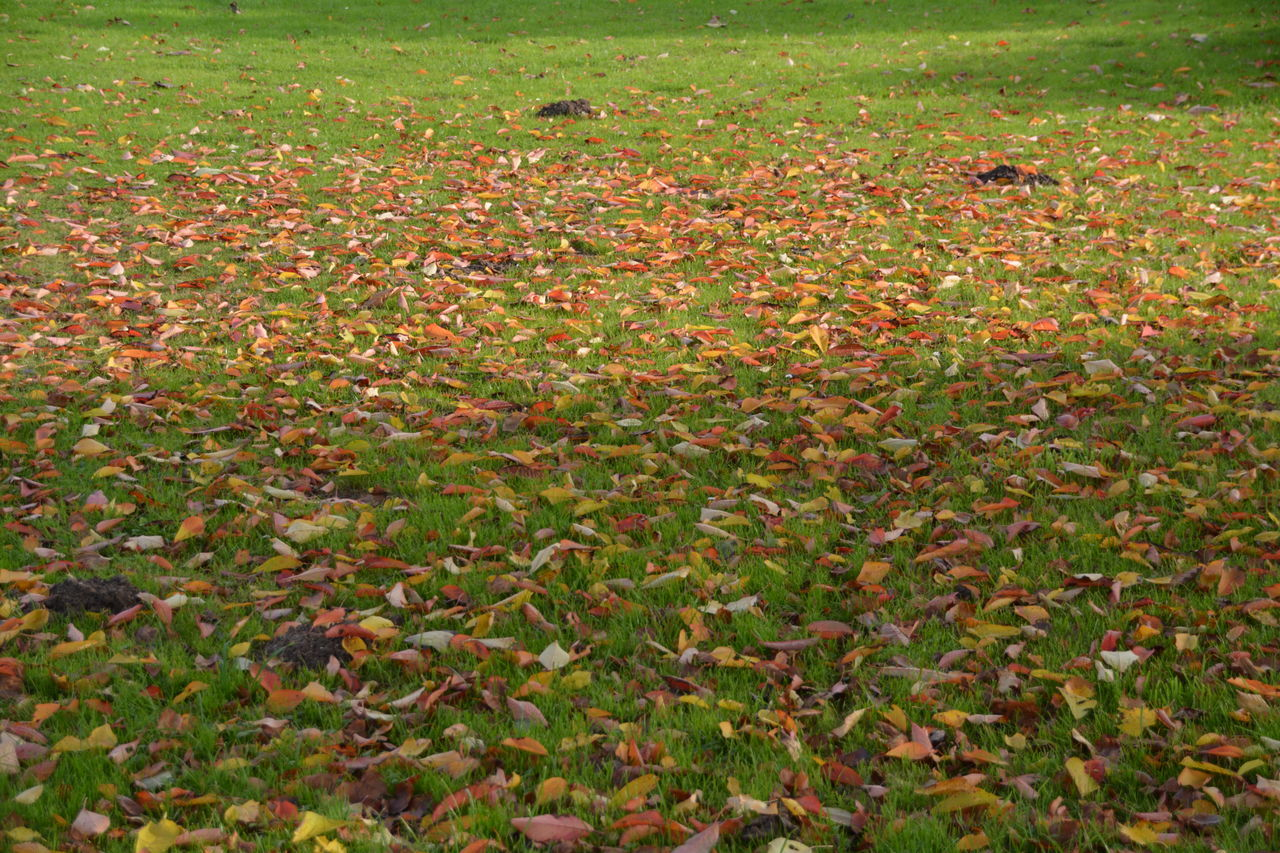 nature, field, leaf, grass, autumn, growth, day, outdoors, no people, backgrounds, beauty in nature, freshness