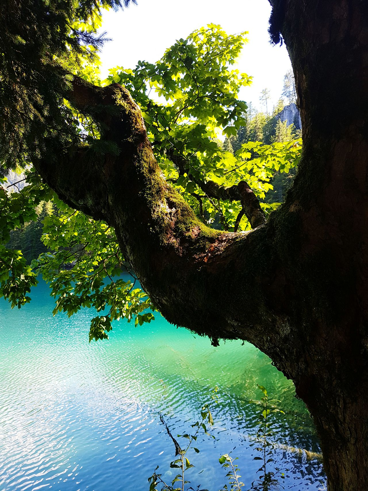 Colour Of Life Nature Photography Laghi Di Fusine Holidays Samsung Galaxy S7 Edge