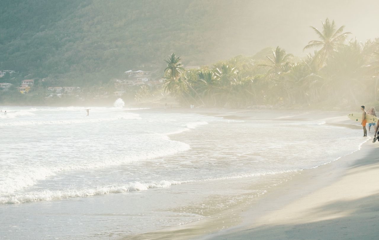 palm tree, beach, sea, sand, nature, real people, tree, wave, water, day, outdoors, motion, beauty in nature, scenics, one person, vacations, men, full length, sky, people