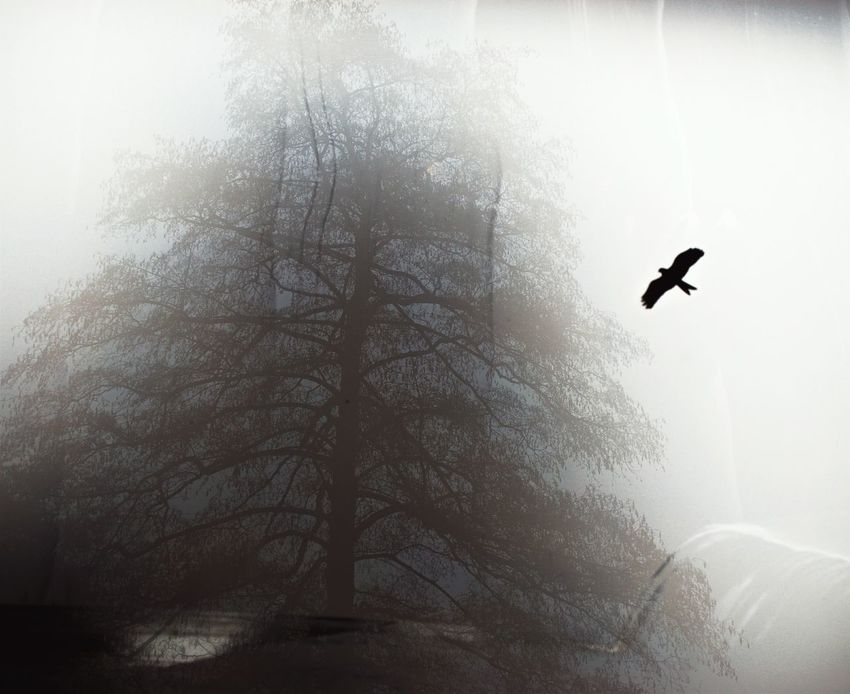 Bird Fogging Steaming Window Wintertime Prayforparis Trees Animal & Animal Streetphoto_color Illusion Optical Illusions Window View Paying Attention My Eyes My Nature Fog Tears In Heaven  Sadness Tree Silhouette Flyfish Album EyeEm Best Shots Fine Art Photography Turn Your Lights Down Low Dreamscapes & Memories Nordic Light Fine Art