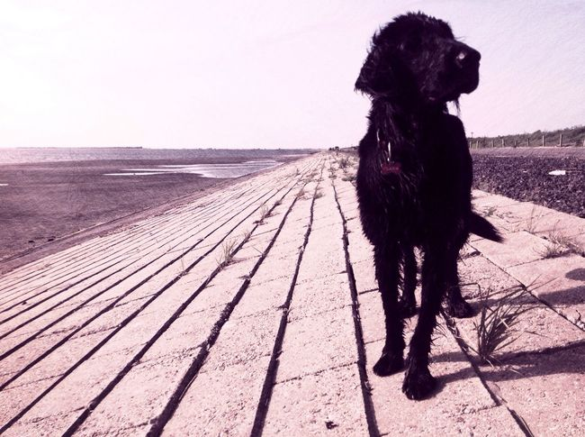 One Animal Pets Animal Themes Domestic Animals Sea Dog Horizon Over Water Mammal Clear Sky Beach Water Nature Outdoors Sky Day Dogslife Shore Doglover No People Oosterschelde Dogs