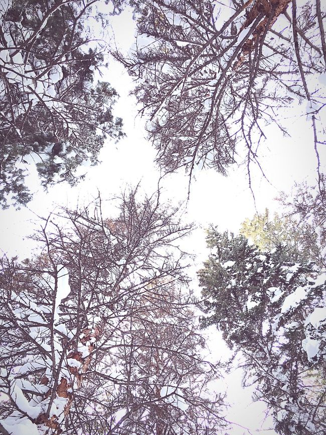 Look up! Beauty In Nature Nature Sky Snowy Snow Covered Cloud - Sky Explorations Outdoors Snowcoveredtrees