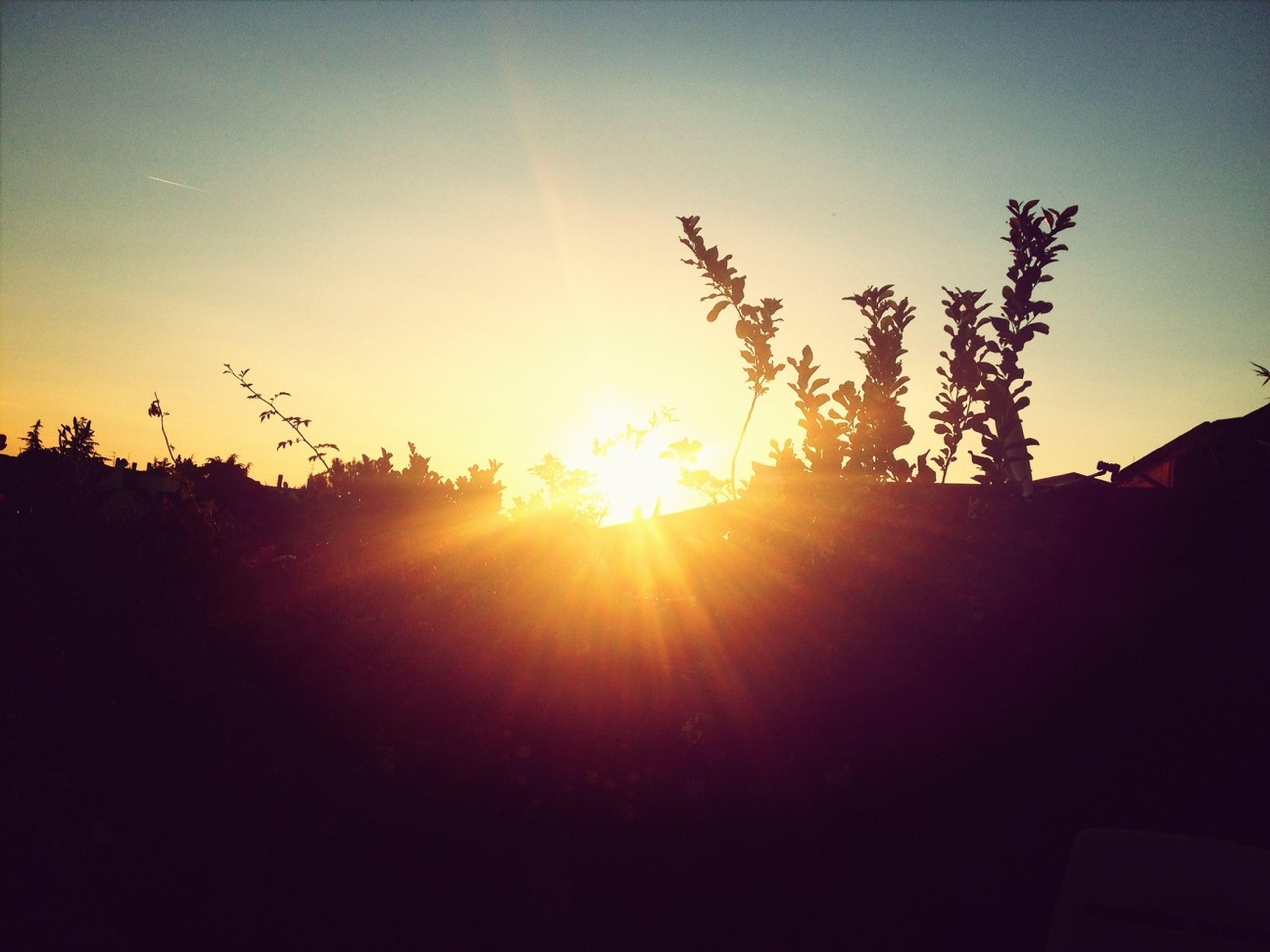 sun, sunset, silhouette, sunbeam, sunlight, clear sky, lens flare, copy space, tranquility, tranquil scene, beauty in nature, nature, tree, landscape, scenics, sky, bright, field, no people, outdoors