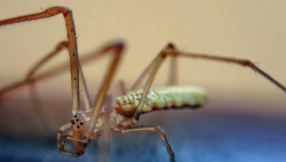 Beautiful stock photos of spider's, Animal Themes, Animal Wildlife, Animals In The Wild, Arachnid