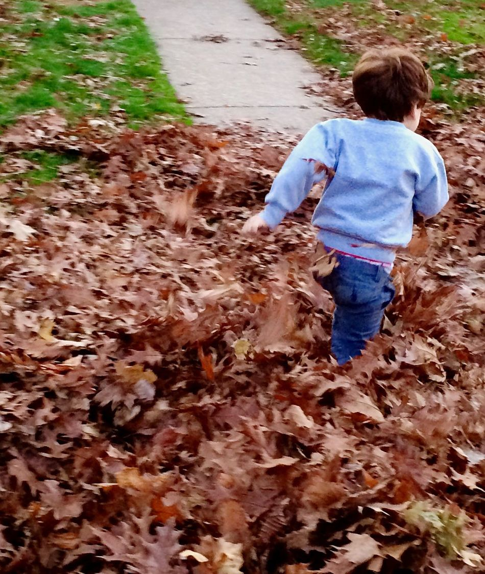 Autumn Autumn Leaves Leaves Fall Leaves Leaf Pile Season  Family Check This Out Fun Having Fun Kids Kids Being Kids How You Celebrate Holidays IPhoneography IPhone Fall Fun Playing The Culture Of The Holidays