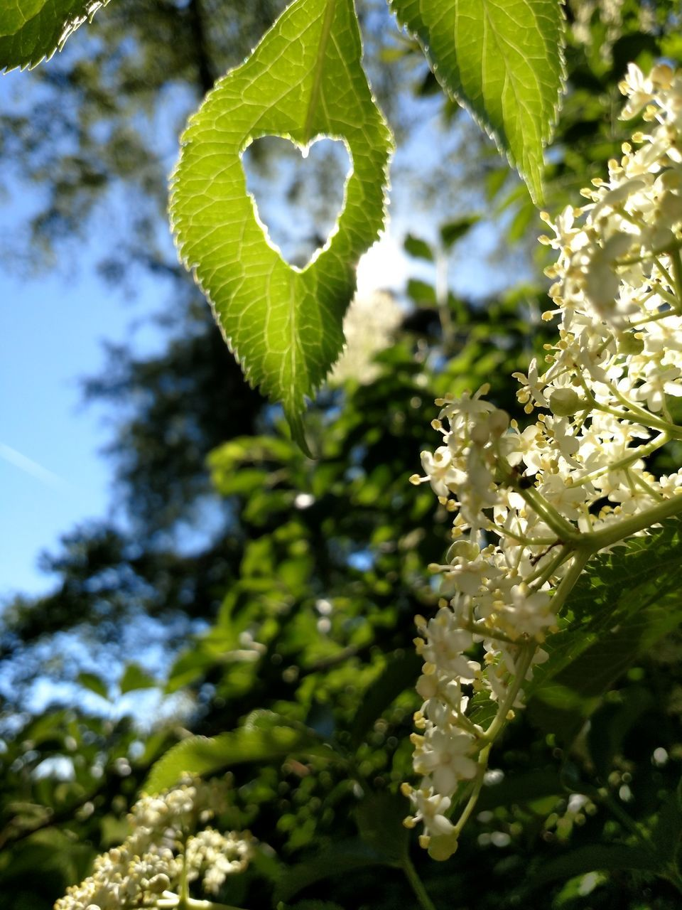 growth, nature, beauty in nature, leaf, fragility, flower, plant, freshness, day, no people, close-up, green color, outdoors, blooming, tree