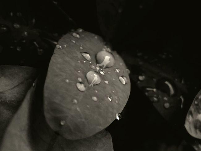 Waterdrops Blackandwhite Photography Rain Drops Leafporn Leaf 🍂 @aiiko Black And White Photography Aiikos Rain.drops Aiikos Garden Bnw Drops Aiikos Black.n.white Blackandwhitephotography Black & White