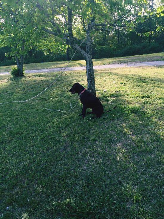 Canine Companion Training Dog Puppy Dog Let Me Go Companion Dog