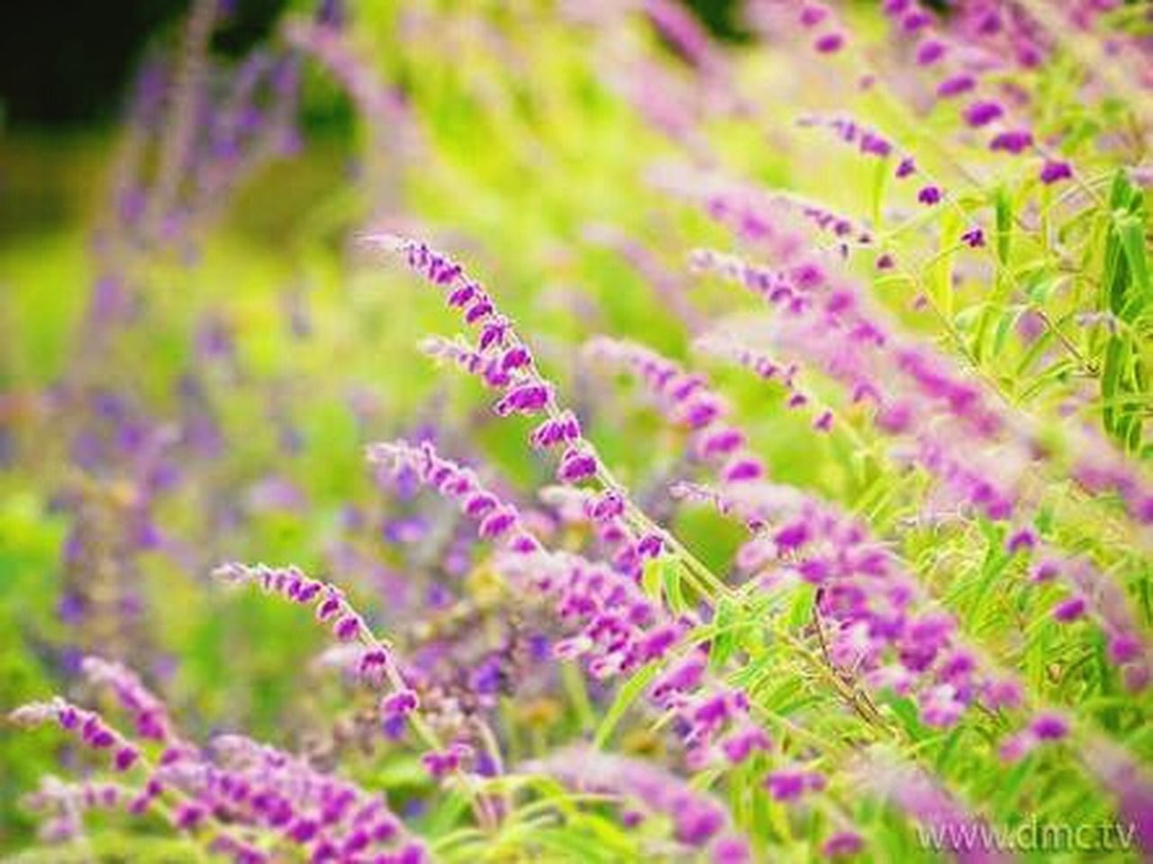 I Like Purple Plant Herbal Medicine Flower Grass Nature Lavender Beauty In Nature Growth Wildflower Flower Head Outdoors Close-up No People Fragility Inflorescence Day Freshness Crocus