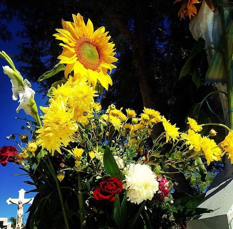 Flowers Flores Jardin Camposanto Cementerio Cementery