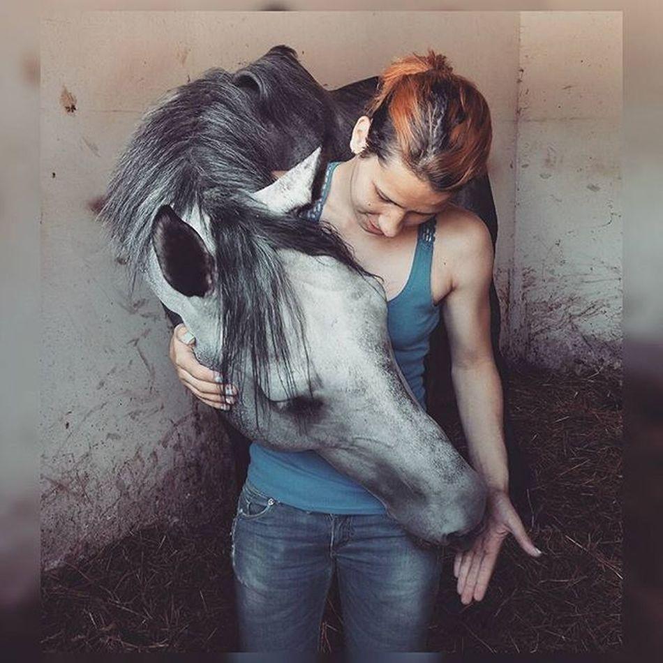 Dum spiro, spero. ❤🏇 Bigben BIGLOVE Thoroughbredsofinstagram Thoroughbreds purasangreingles horsesofinstagram instagram