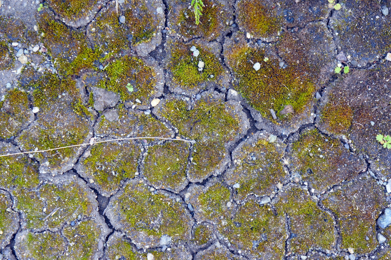 full frame, backgrounds, textured, cracked, no people, rough, day, pattern, close-up, outdoors, nature