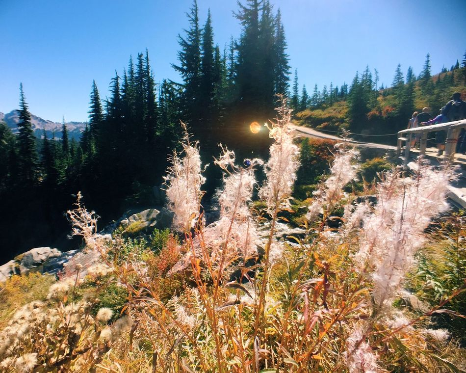 On A Hike Fall Colors Mt. Rainier