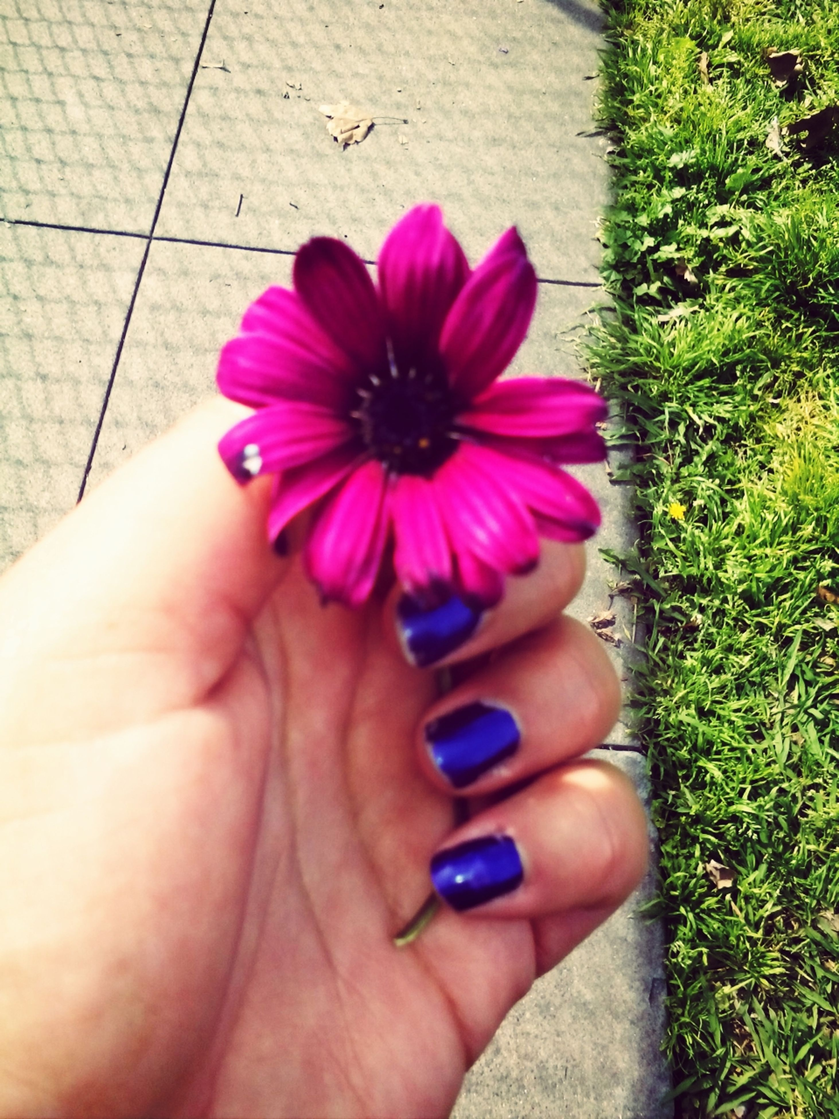 person, flower, holding, freshness, personal perspective, high angle view, part of, petal, fragility, flower head, human finger, cropped, unrecognizable person, leisure activity, pink color, lifestyles