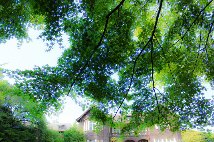 It was designed by architect Josiah Conder Architecture Bright European Architecture European Garden EyeEm Gallery Eyeemphotography Gardens Japanese Garden Leafs Light And Shadow Nature_collection Tokyo,Japan Trees 旧古河庭園 Pastel Power