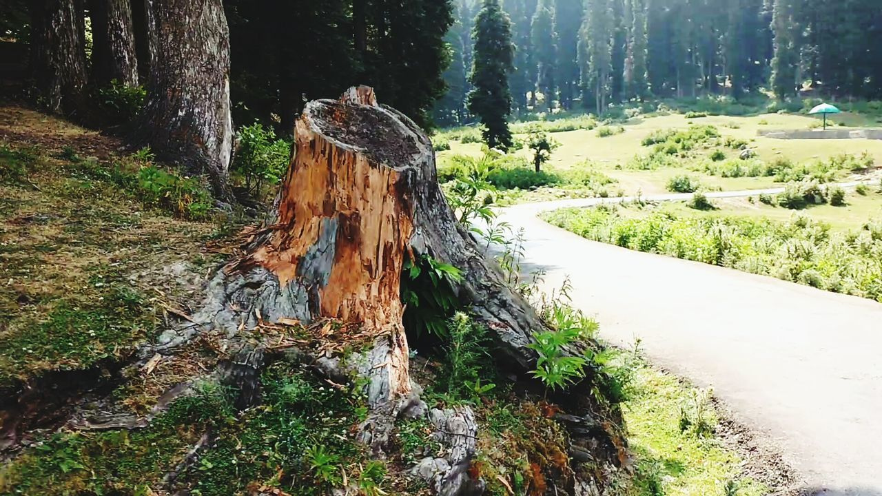 First Eyeem Photo Wine Moments Nature Nature Photography Srinagar Kashmir Tree Trunk Treelovers Tree_collection  Roads Kashmir