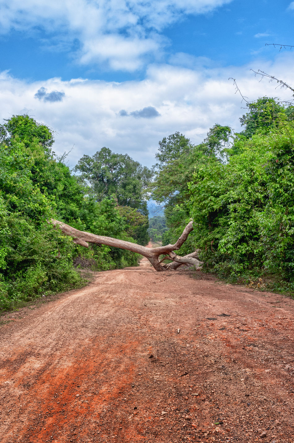 Adventure ASIA Blocked Cloud - Sky Day Diminishing Perspective Dirt Dirt Road Green Color Journey Laos Lost No People Obstacle Outdoors The Great Outdoors - 2016 EyeEm Awards Remote Road Sky Tha Khaek Loop The Way Forward Track Travel Tree Vanishing Point