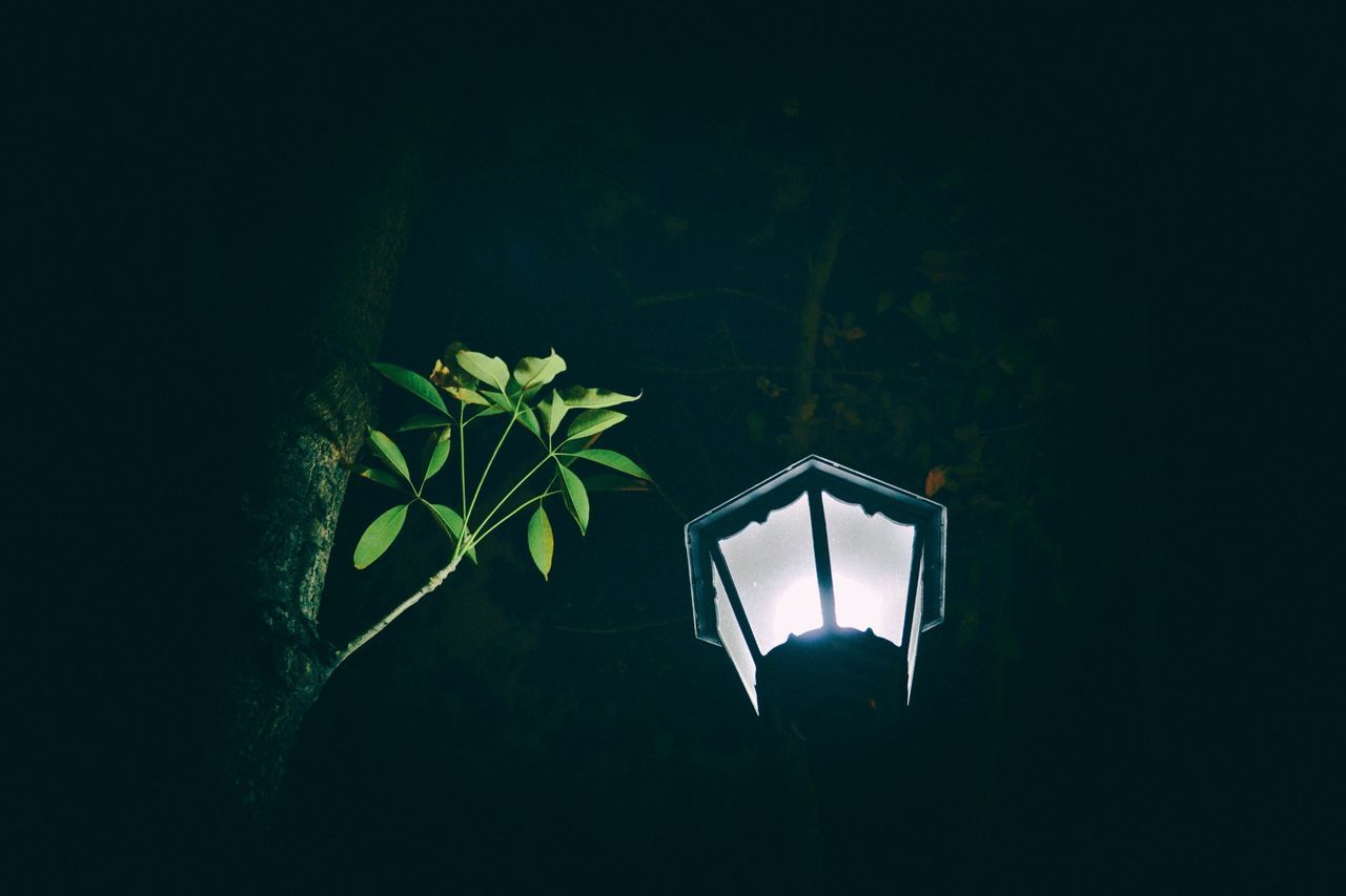 Low Angle View Of Illuminated Street Light And Tree