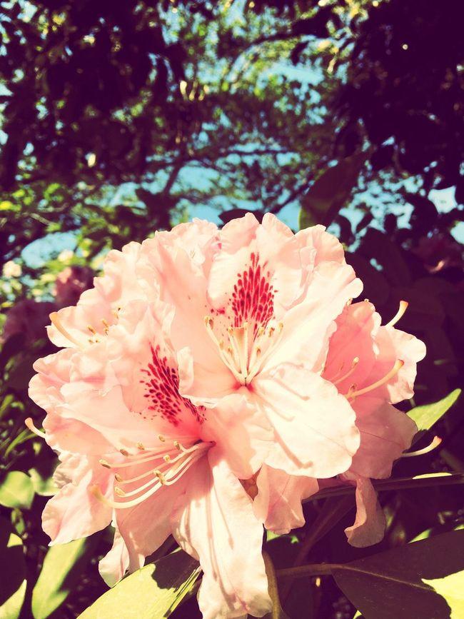 White Color White Flower Flowers Spring