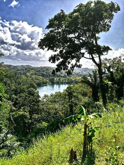 Lake View Tree Nature Beauty In Nature Reflection Scenics Water Green Color Outdoors Sky Plant No People Cloud - Sky Lake Landscape Freshness Panama City Green Color Panama Canal Panamá Panama507 PANAMA SKYLINE