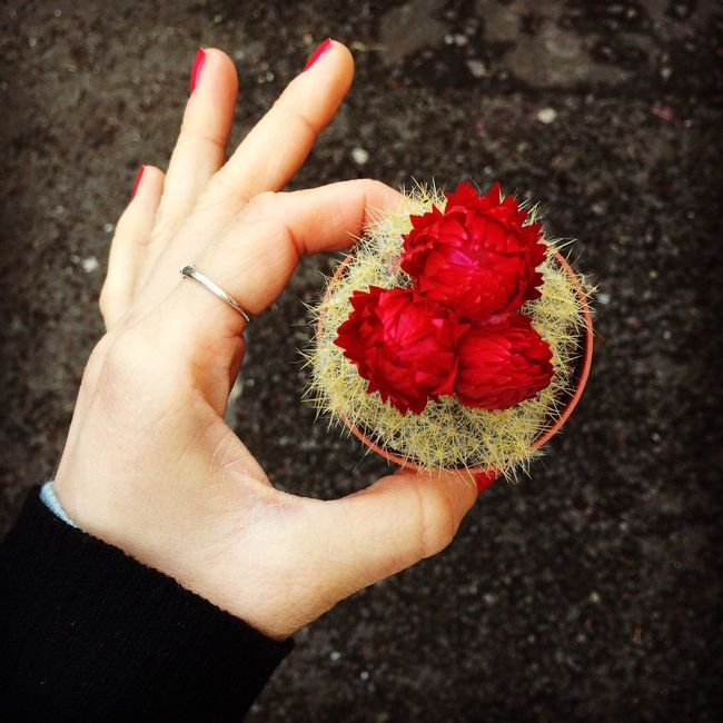 Happy Valentine Cactus Pretty Flower Redred Flowermarket Columbiaroad Taking Photos Beautyandthebeast Beautiful