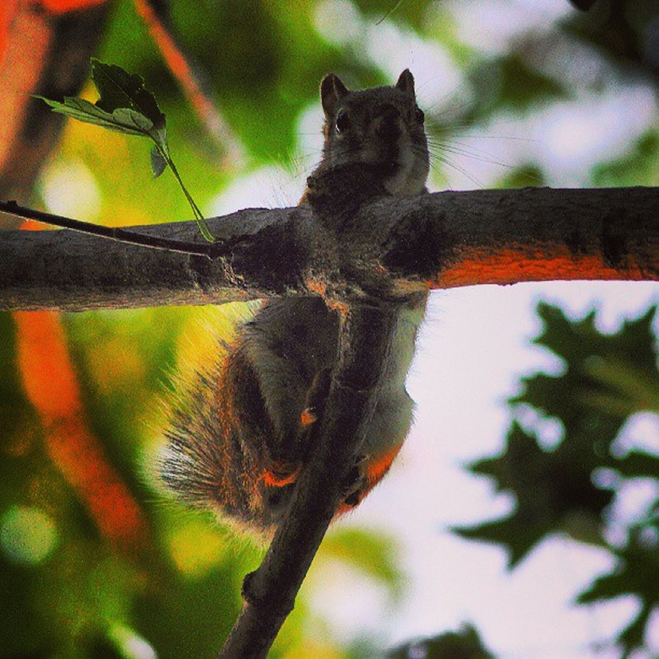 Eyes of the forest Nuts_about_squirrels Wildlife_perfection Underdogs_nature Nature_perfection