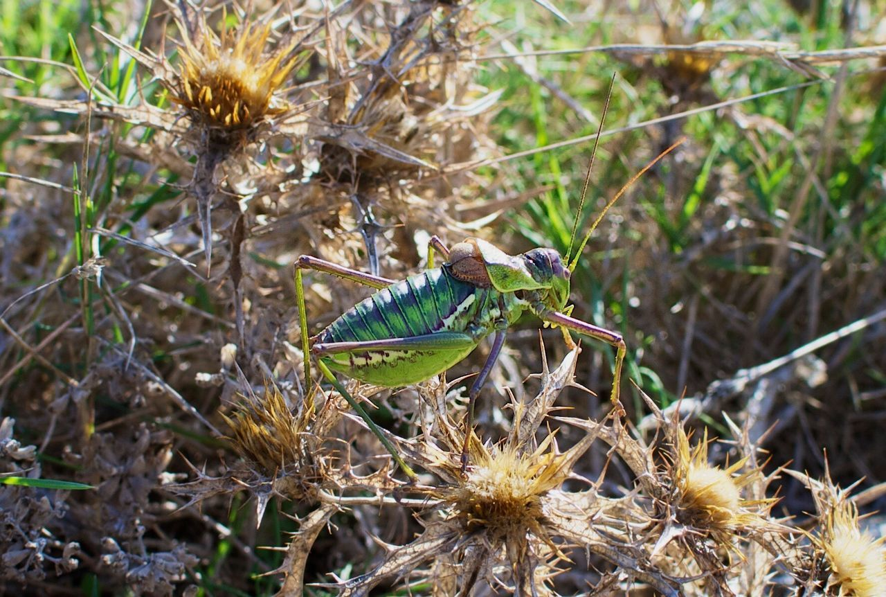 Animals In The Wild Animal Themes Outdoors Beauty In Nature Insect Close-up Crickets Mallorca