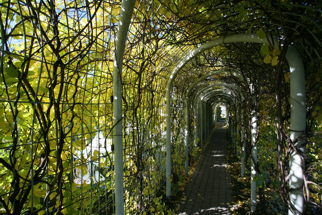 Climber Garden Garden On The Roof Pergola Roof Garden Tunnel University Library