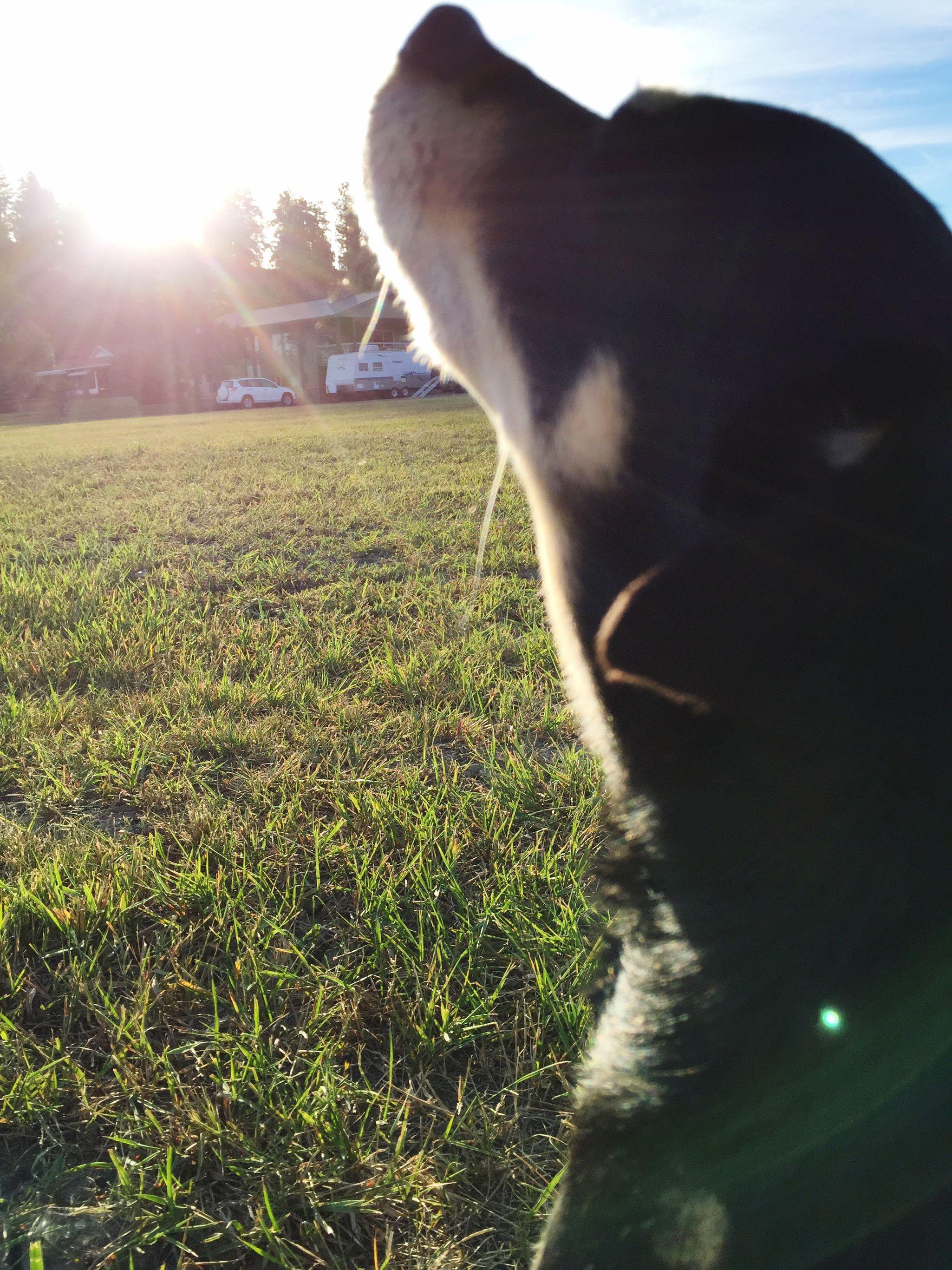 Fresh Morning Air