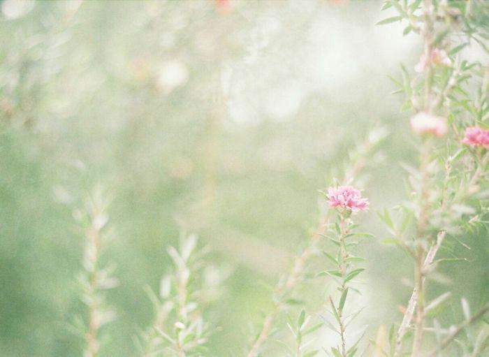 Flower Green Film Filmcamera Halfcamera