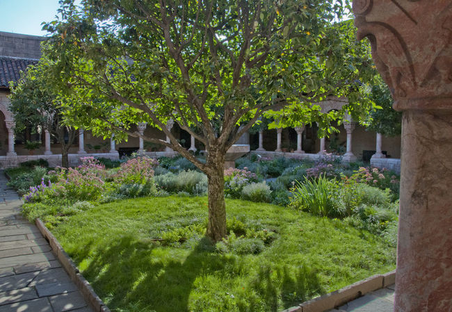 The cloisters Architecture Cloister Green Color Harlem  Harlem, NYC New York New York City No People The Cloisters Tree