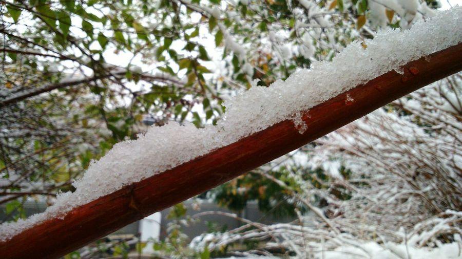 Neige Snow Nature La Tronche