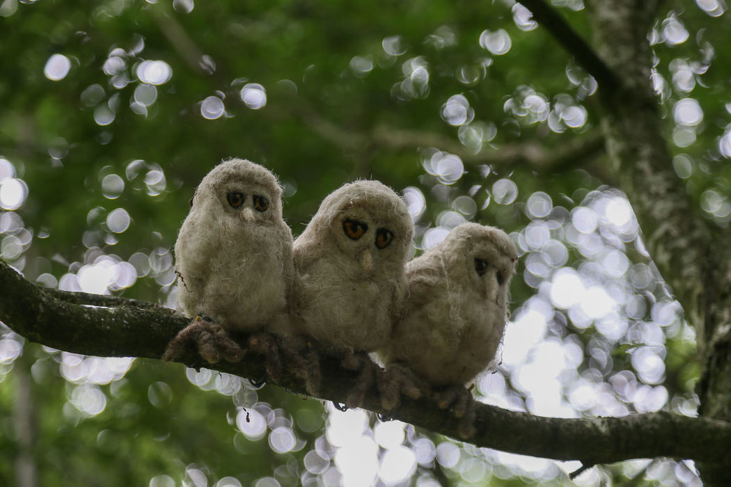 """Wooly """"birds"""" sitting on a branch watching people walk past! Animal Themes Animal Wildlife Animals In The Wild Bird Branch Close-up Day Humour Humourous Low Angle View Nature No People Outdoors Perching Togetherness Tree Woolen Wooly"""