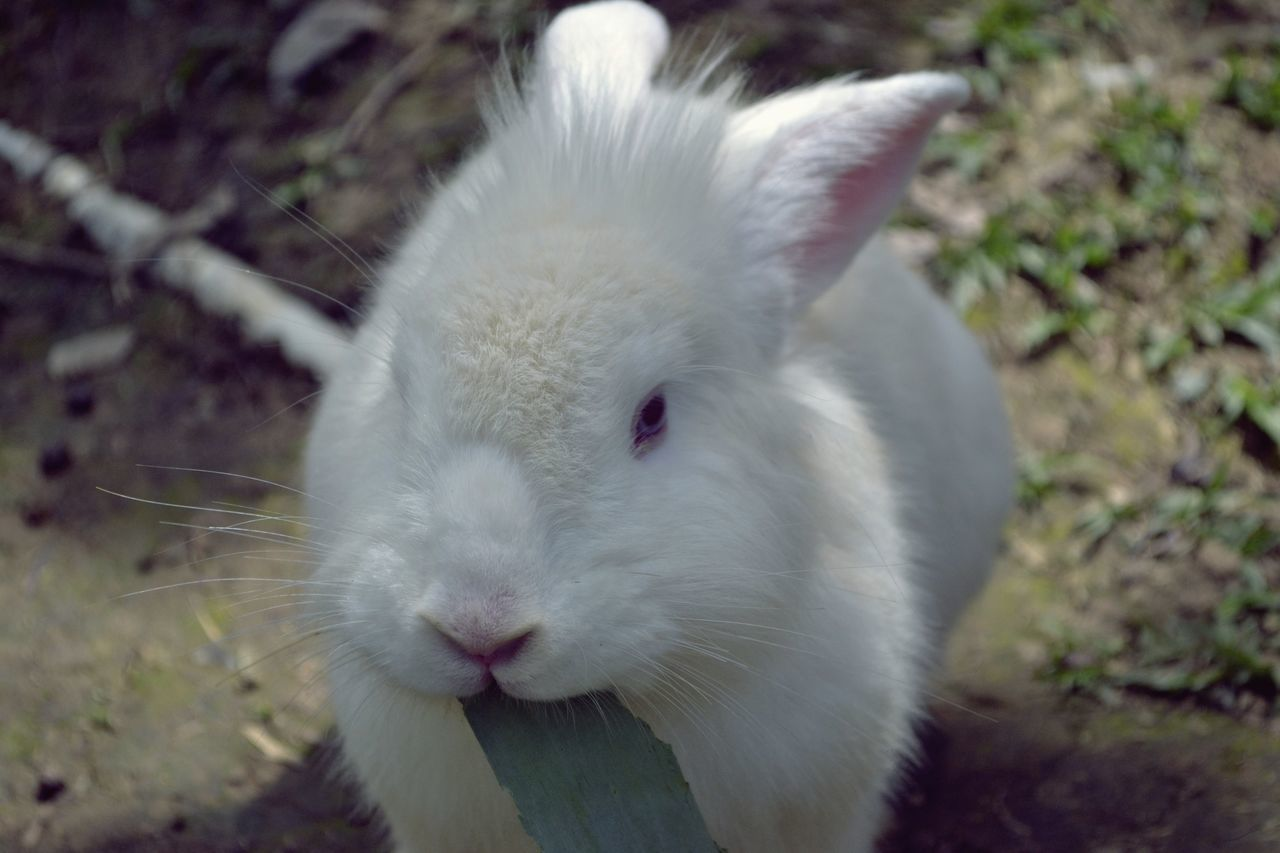 rabbit village A Animal Eye Animal Themes Animal Head  Animal Themes Animal Wildlife Rabbit Rabbit Eye Rabbit Village Zoo Zoology