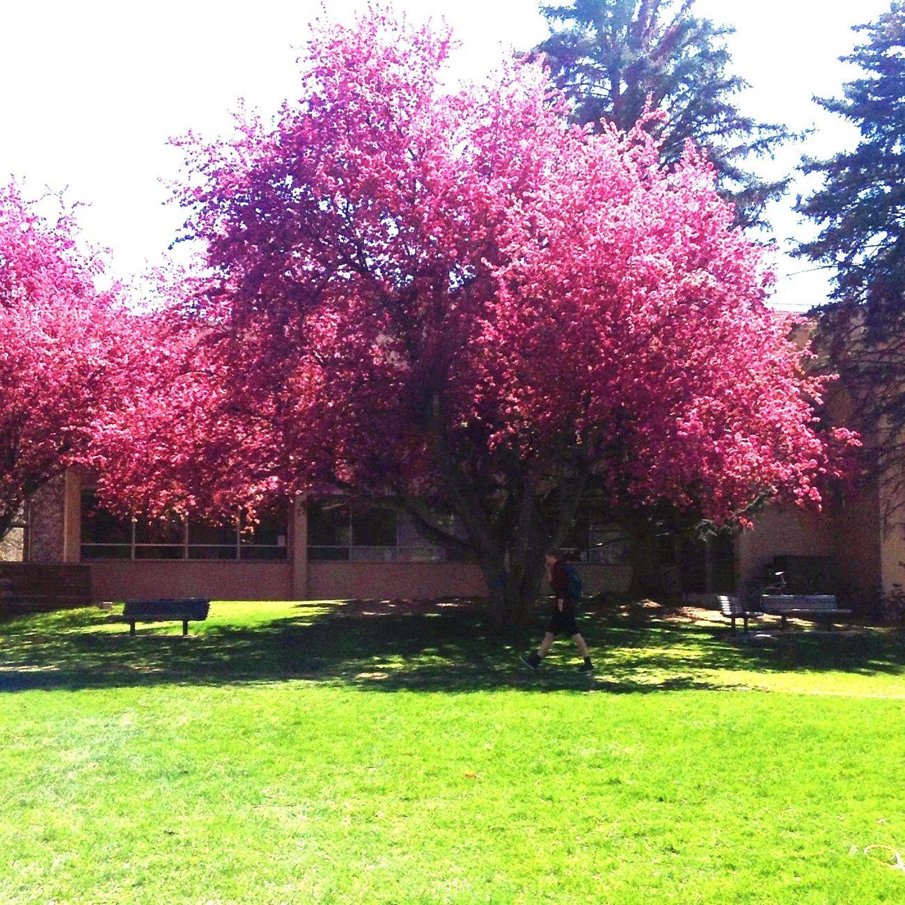 Beautiful tree First Eyeem Photo