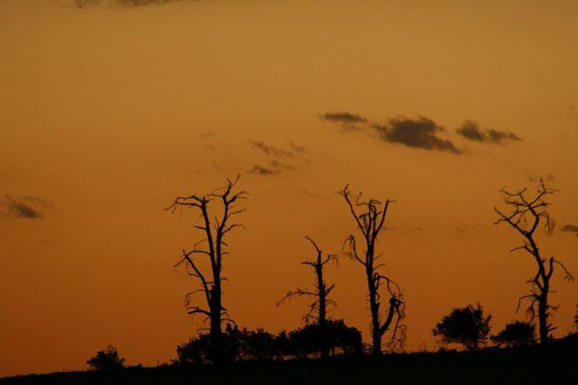 Australia Showcase: February Sunset Clouds Australian Summer Skyporn EyeEm Best Shots EyeEm Gallery Eyeem Australia Tree TreePorn Silohette