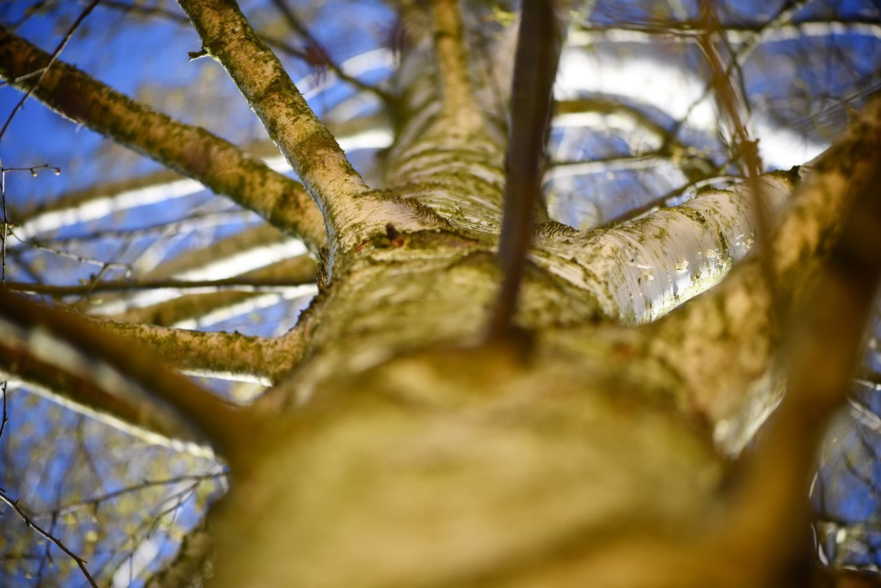 branch, low angle view, selective focus, tree, close-up, nature, no people, day, outdoors, beauty in nature, sky