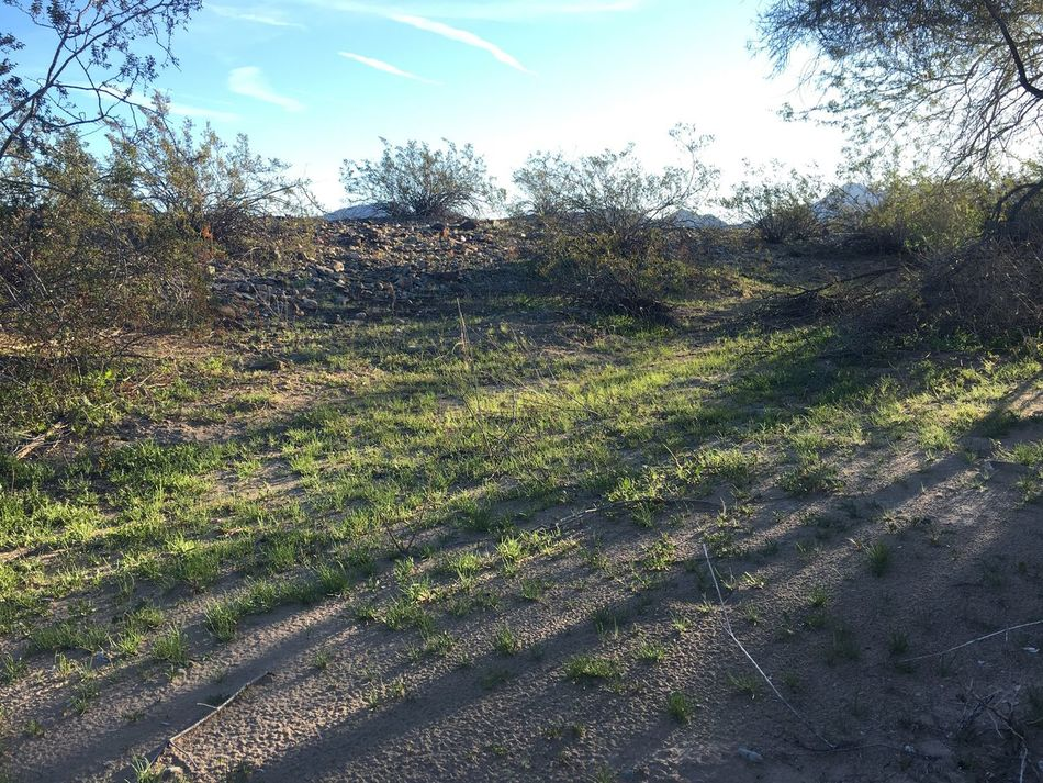 New grass growing near a wash in the Arizona desert. Nature Growth Tree Tranquility Outdoors No People Day Beauty In Nature Grass Landscape Tranquil Scene Plant Desert Life Arizona Desert Nature Arizona Plant Life