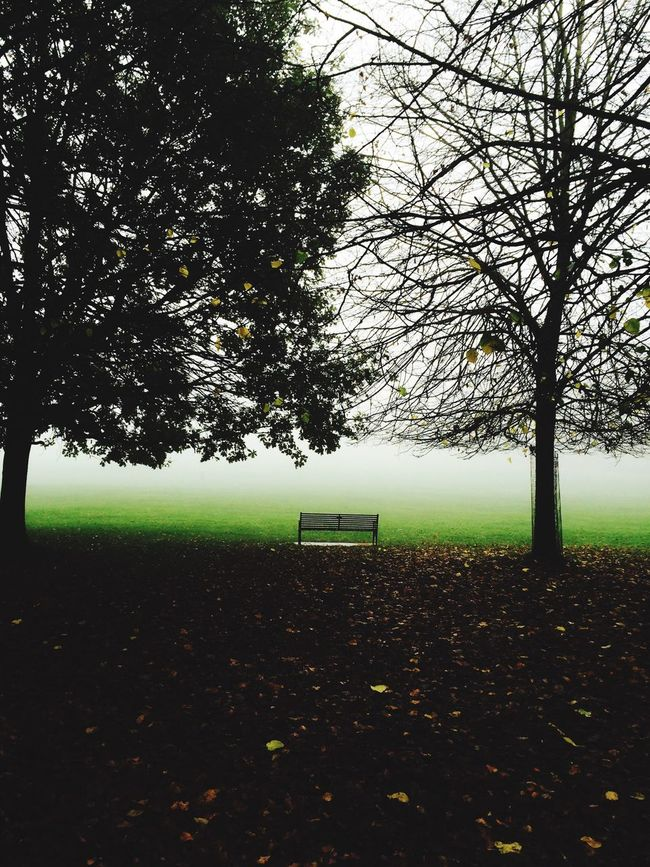 Lonely bench🔎 Fog Foggy Wollaton Hall Wollatonpark Nottingham England Photography Trees Bench Parkbench Lonely StillLifePhotography Still Life Art Pictureoftheday Country