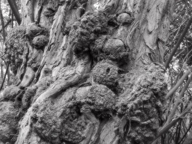 Crazy Wood Tree Burls Tree Porn Tree Art Trees Monochrome Light And Shadow Creative Light The Art Of Photography Getting Creative